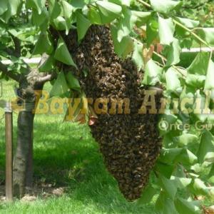 Dökme Paket arı