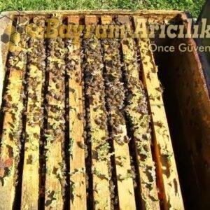8 Çerçeve paket arı